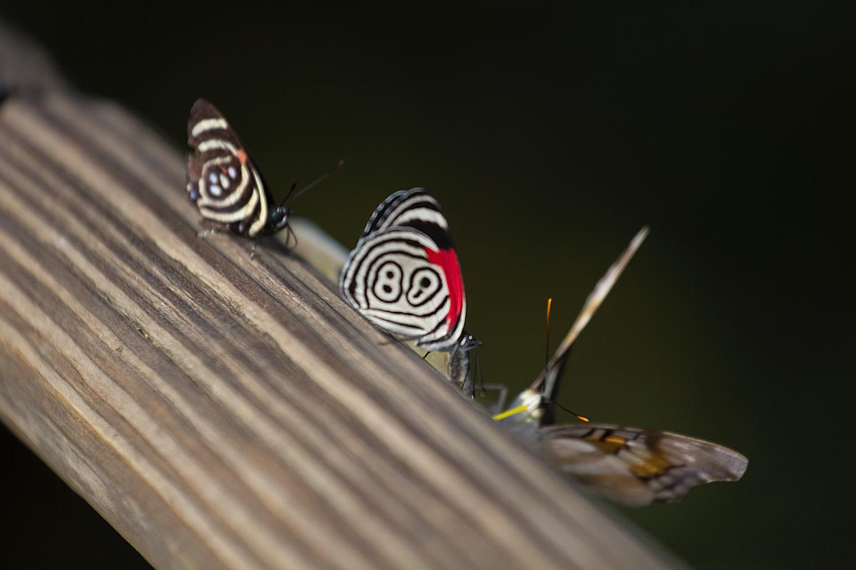Iguazu flora fauna Sightseeing Argentinia Argentinien South America