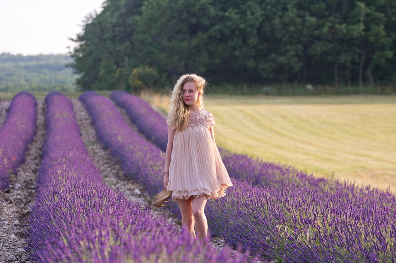Lavenderfields Provence, Lavendelfelder Provence, Provence