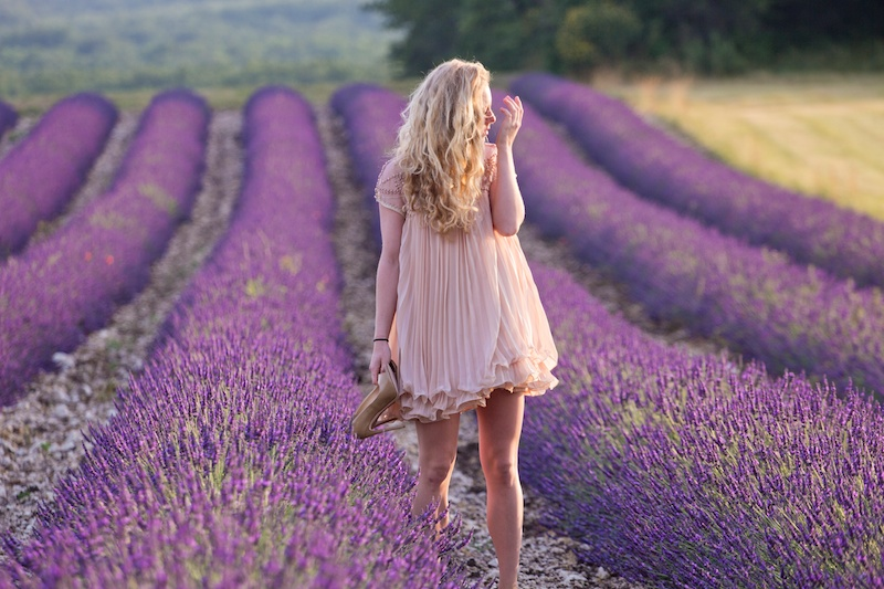 Lavender fields Provence, Lavendelfelder Provence, Provence
