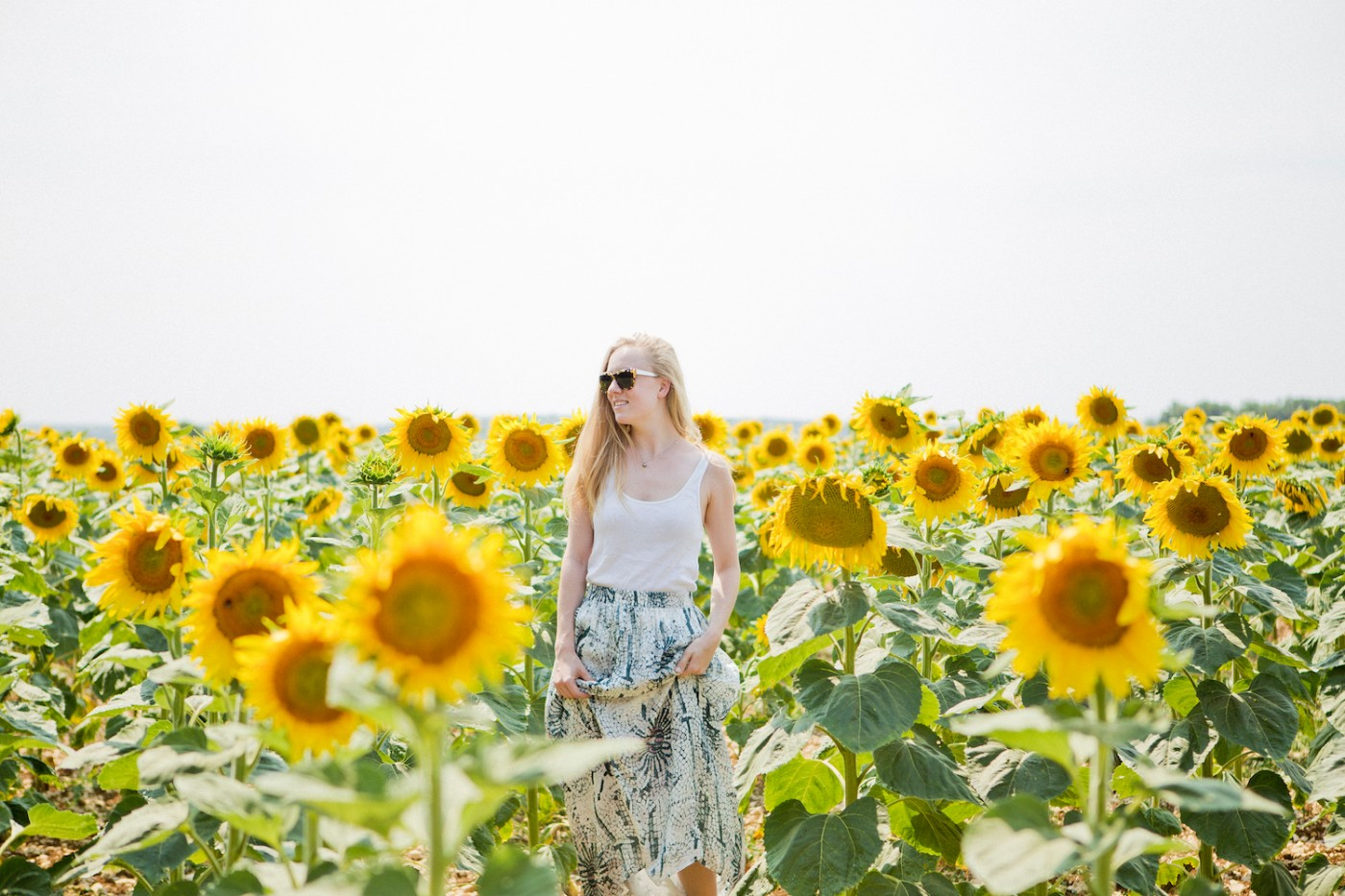 The Golden Bun | sunflower field France, turnesol France, Sonnenblumenfeld Frankreich