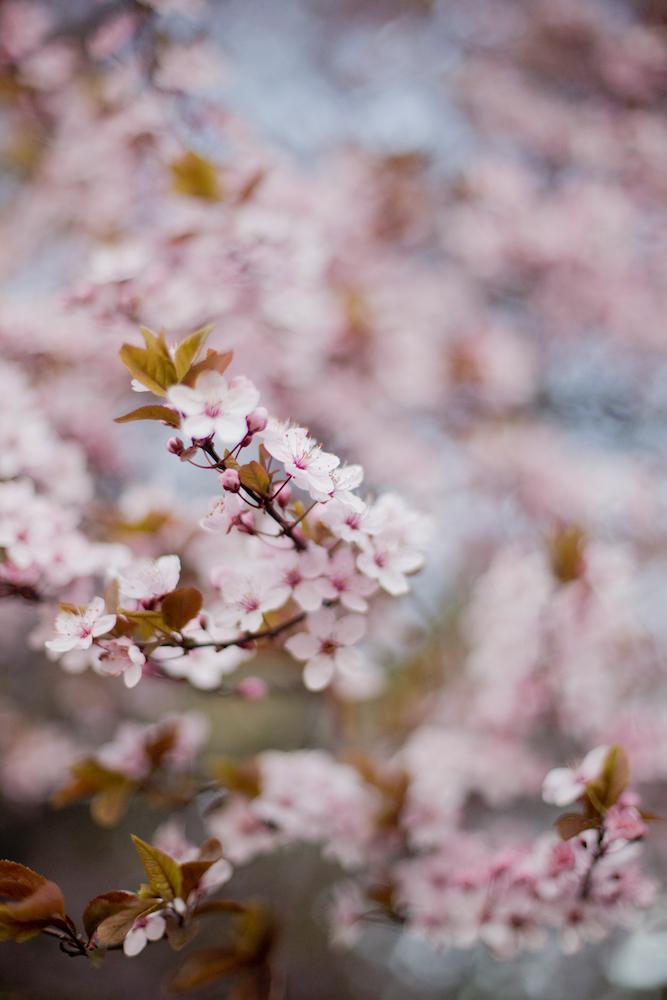 Osterwochenende in Wien – 5 Dinge, die wir gemacht haben
